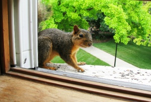 A squirrel at the window got my attention--and put me on notice.