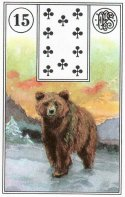 bear-piatnik