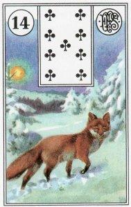 fox-piatnik