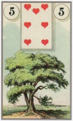 tree-dondorf lenormand