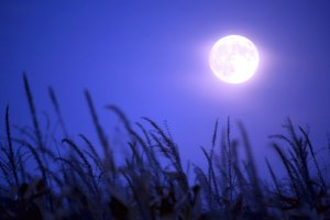 This week, we get to experience a full moon in the sign of Taurus.