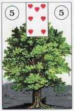 tree-wanderwust