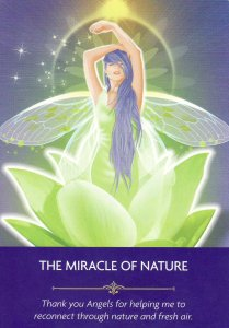 The Miracle of Nature, from the Angel Prayers Oracle Cards by Kyle Gray & Jason Mccreadie. Published by Hay House.