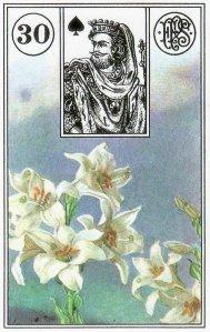Lilies-Piatnik